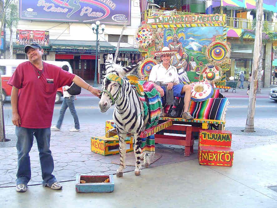 Tijuana mexico cock donkey show